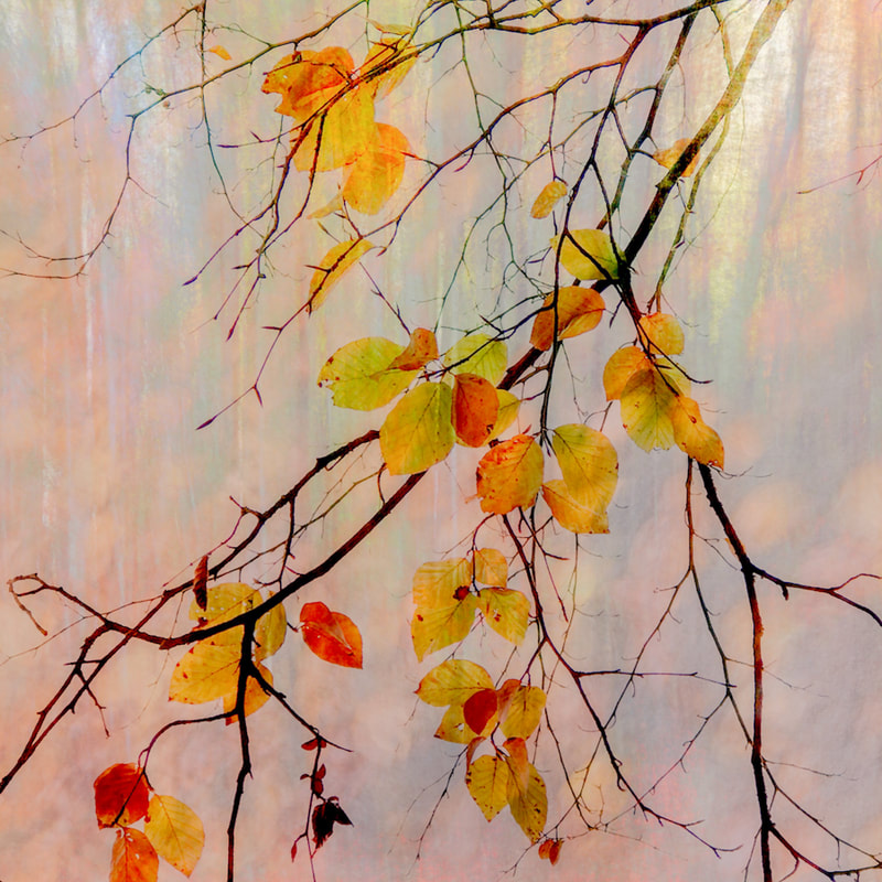 Autumnal abstract, multiple exposure