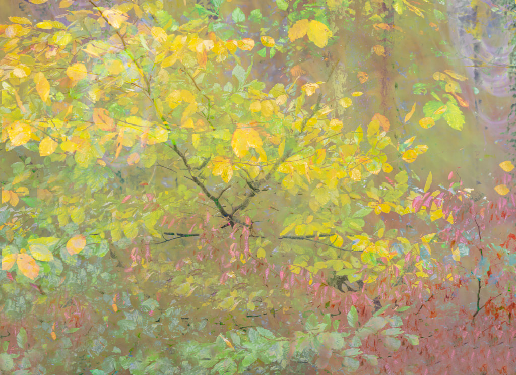Early Autumn in the woods, multiple exposure