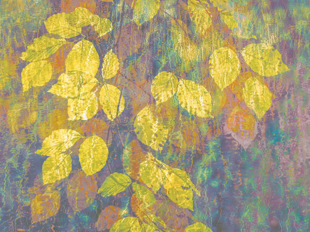 Golden beech leaves, multiple exposure