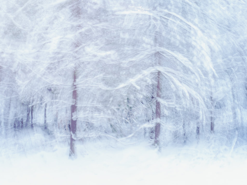 Snowy swirls, woodland, Forest of Dean, ICM