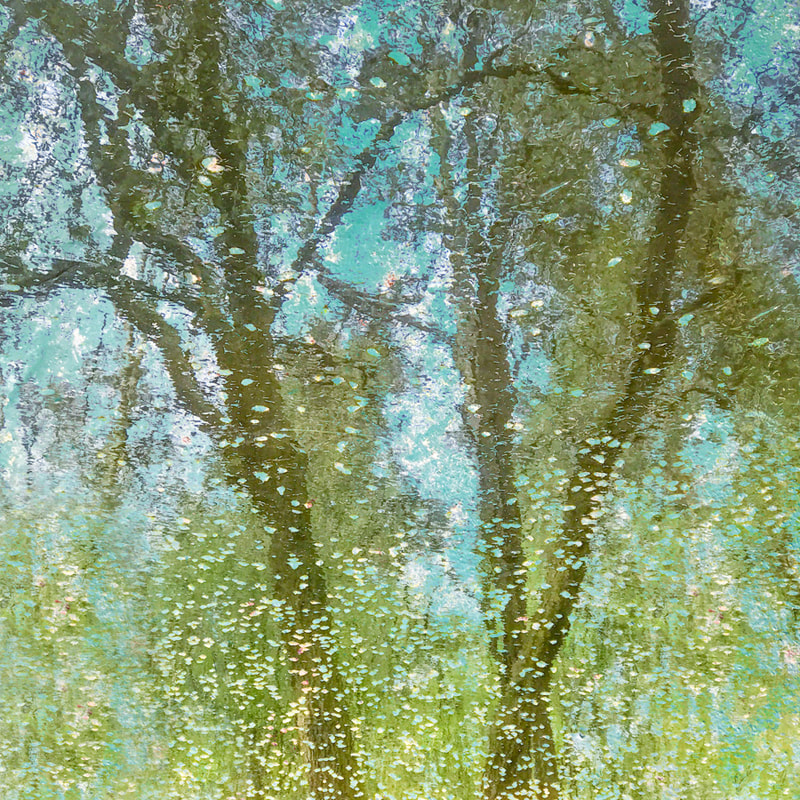 Reflections, goat willow catkins, multiple exposure